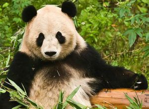 updates panda deepcrawl